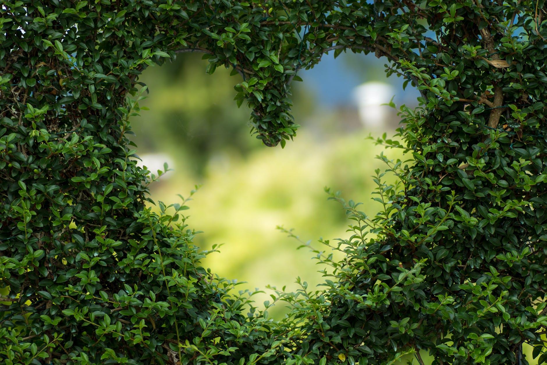 El Amor y el Miedo las dos emociones básicas, de ellas todas las demás.